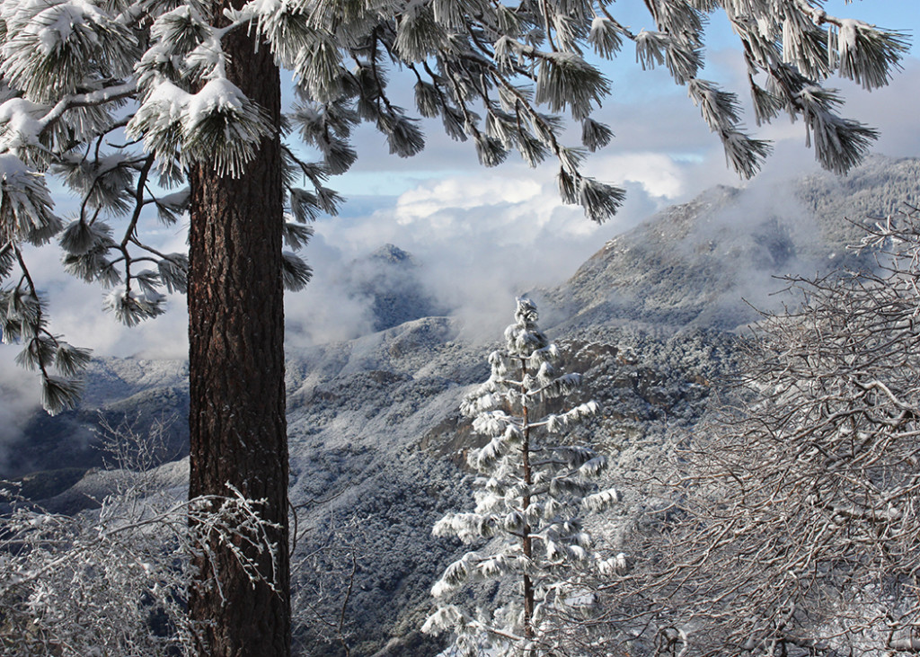 A Wintery Weekend in Sequoia National Park! (Part 2)
