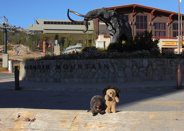 The Wooly Mammoth of Mammoth Lakes!