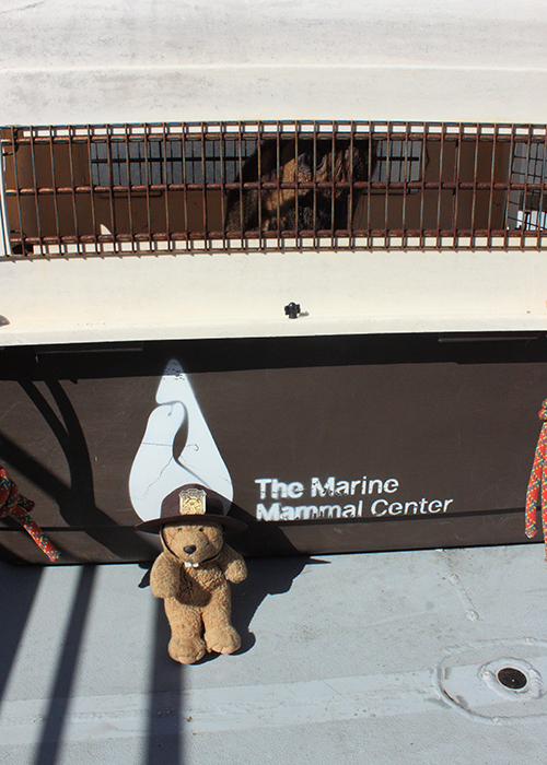 Volunteer with the Marine Mammal Center!