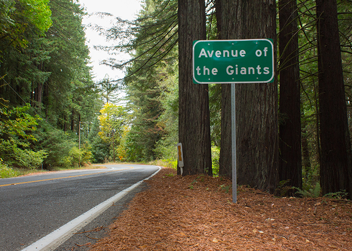 Redwood Real Estate in the Avenue of the Giants!