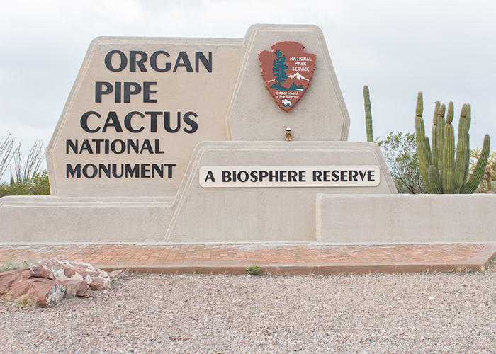 Organ Pipe Cactus National Monument!