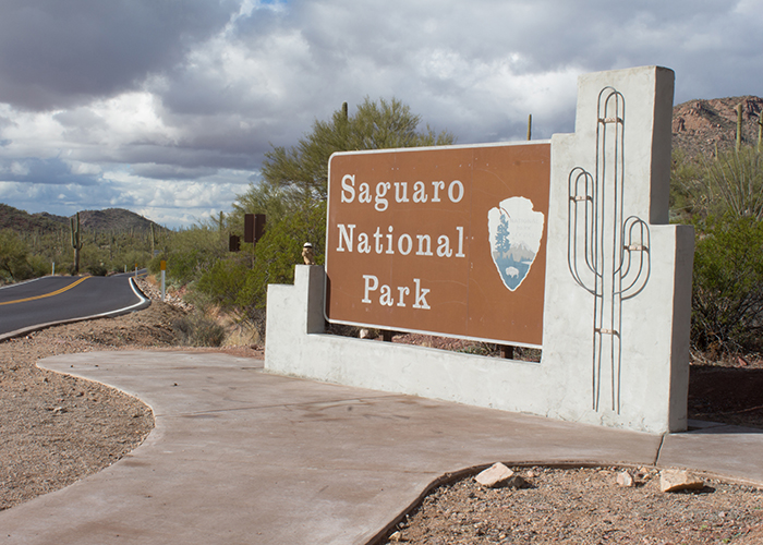 Saguaro National Park!