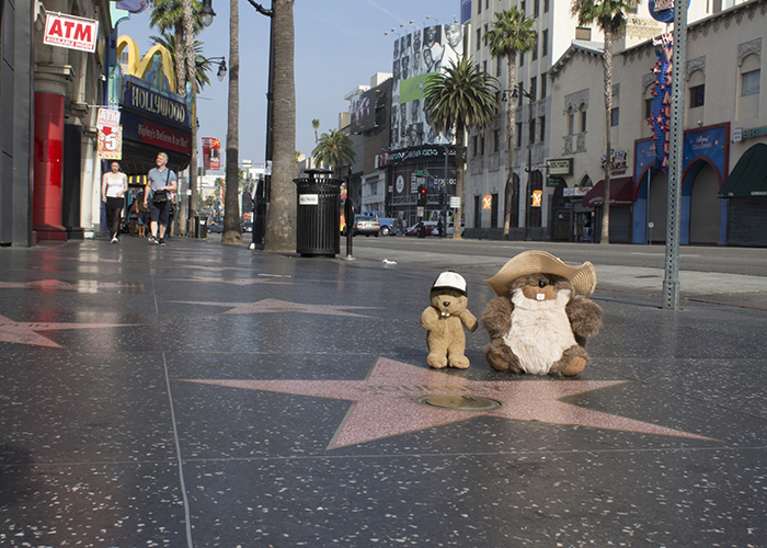 The Hollywood Walk of Fame!