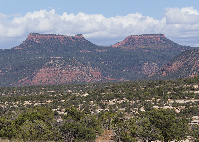 The Push to Repeal or Replace Bears Ears!
