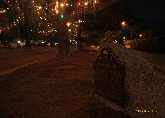 Christmas Tree Lane (Landmark #990)!